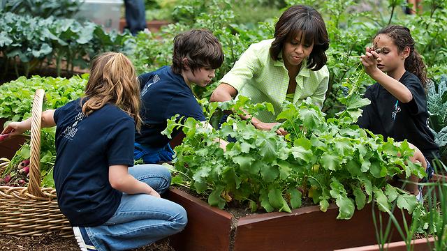 מגדלת חסה עם דור העתיד. מישל אובמה  (צילום: AP) (צילום: AP)