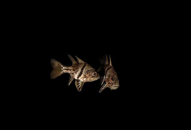 דגים במעמקים (צילום: רפי עמר) ()