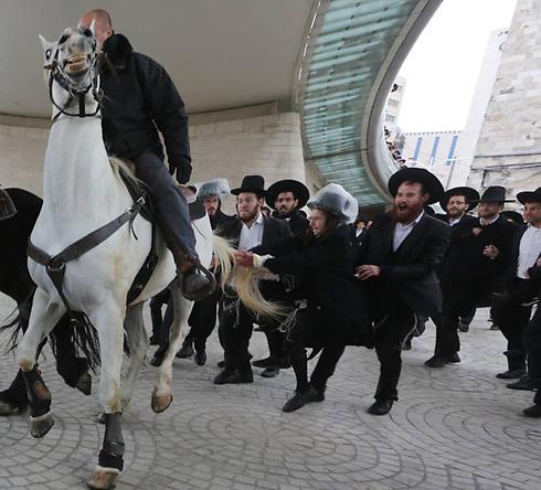 חרדי מושך בזנבו של סוס משטרתי (צילום: גיל יוחנן) (צילום: גיל יוחנן)