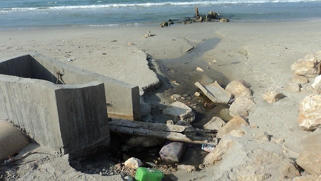 עדיף לא להתקרב. חוף בחיפה (צילום: ניצן מתן, באדיבות עמותת צלול) (צילום: ניצן מתן, באדיבות עמותת צלול)