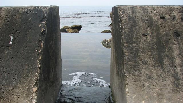 חוף כפר הים, גבעת אולגה (צילום: ניצן מתן, באדיבות עמותת צלול) (צילום: ניצן מתן, באדיבות עמותת צלול)