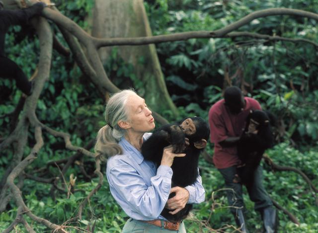 """ג'יין גודאל עם קוף שימפנזה יתום. (צילום: מוזיאון המדע של מינסוטה / יח""""צ הסרט  Jane Goodall's Wild Chimpanzees, 2002) ()"""