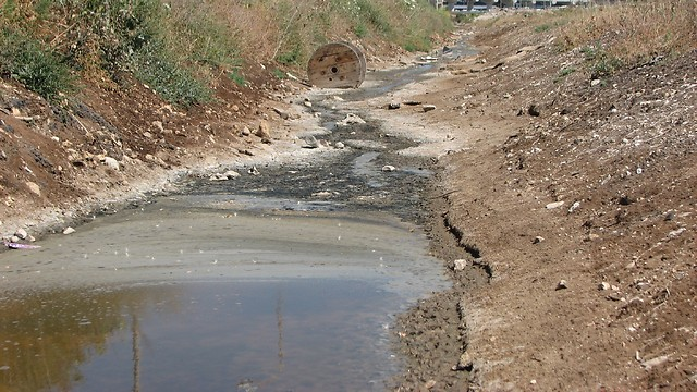 המים המזוהמים ממשיכים לקישון (צילום: ניצן מתן, באדיבות עמותת צלול) (צילום: ניצן מתן, באדיבות עמותת צלול)
