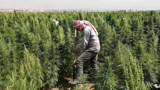 Cannabis farmers in Lebanon (Photo: Reuters) (Photo: Reuters)