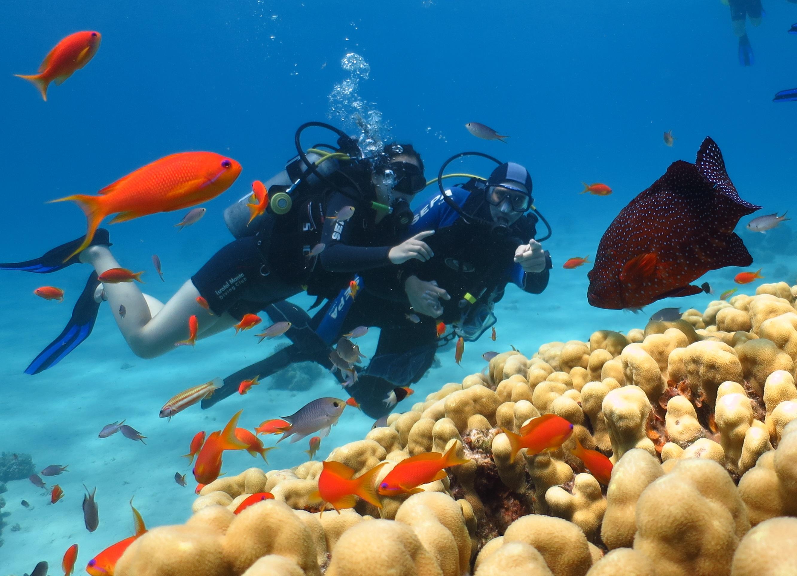 """לצלול בים האדום בלי רישיון צלילה. מנטה (צילום: יח""""צ)"""