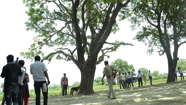 העץ שעליו נתלו הנערות (צילום: AP) (צילום: AP)