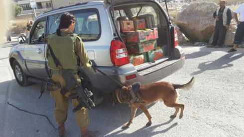 """בסריקות משתתפים גם כלבי יחידת """"עוקץ"""" (צילום: יואב זיתון) (צילום: יואב זיתון)"""