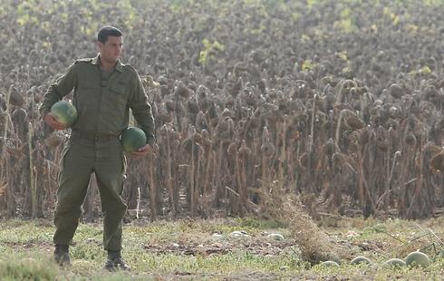 חייל במקשת אבטיחים בשטח ישראל, ליד הגבול (צילום: עידו ארז) (צילום: עידו ארז)