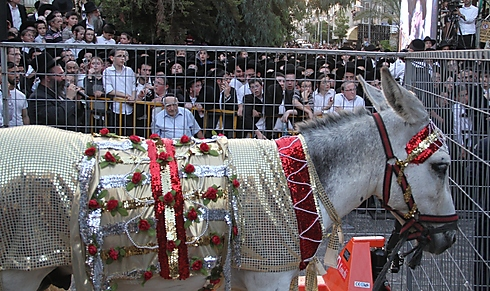 Rare ceremony attracts thousands (Photo: Yaakov Cohen)