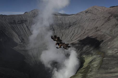 התרנגול נזרק ללוע הר הגעש (צילום: gettyimages)