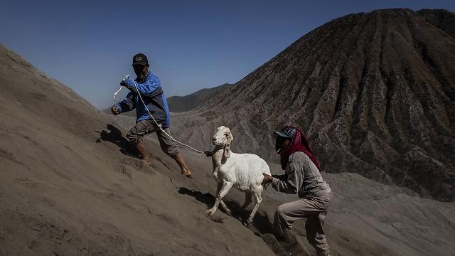 עז ובעליה בדרך לראש ההר (צילום: Getty Images   )