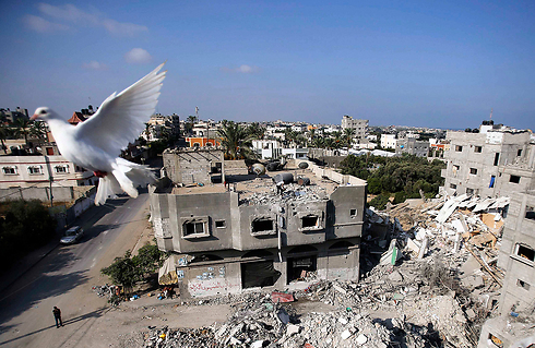 A dove flies over Gaza during Protective Edge (Photo: Reuters)