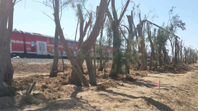 Protective forestation of Ashkelon-Sderot railways
