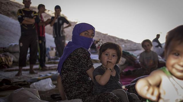 פליטים יזידים. דאעש מבצעים בהם רצח עם (צילום: MCT) (צילום: MCT)