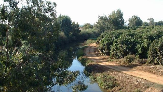 נחל הירקון היום (צילום: החברה להגנת הטבע) (צילום: החברה להגנת הטבע)
