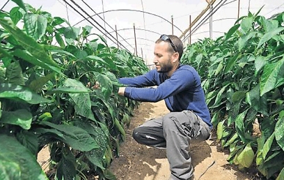 Amir Mashiach: Gave up high-tech career for farming