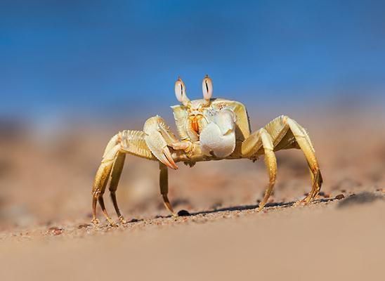 חולון החוף. צולם באילת בחוף הים (צילום: אבי מאיר)