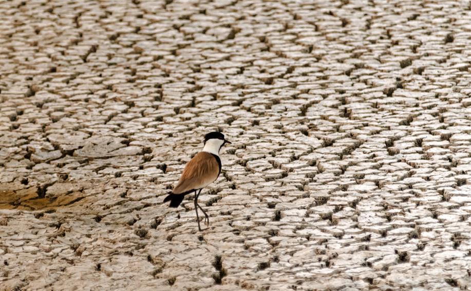 סיקסק מחפשת מעט מים  (צילום: ארי בלטינשטר)