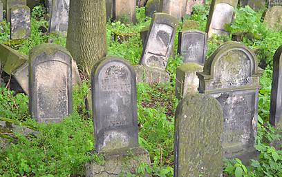 מצבות בבית העלמין היהודי העתיק (צילום: אילת שי) (צילום: אילת שי)
