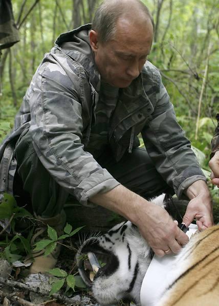 פוטין וטיגריס סיבירי (צילום: AP)