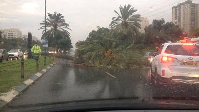 Tree blocking Namir Boulevard (Photo: Noam Yehoshua)