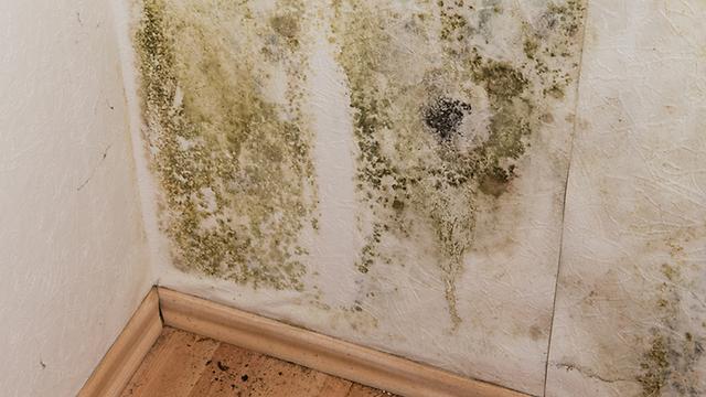 """אל תגידו """"שטויות, נצבע את הקיר"""", פעמים רבות לא תצליחו להיפטר מבעיות רטיבות (צילום: shutterstock) (צילום: shutterstock)"""
