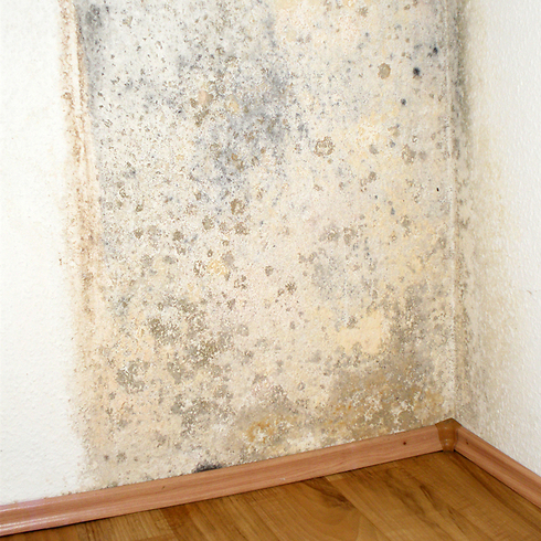 רטיבות בקיר היא אחת הסיבות להתפתחות עובש  (צילום: shutterstock) (צילום: shutterstock)