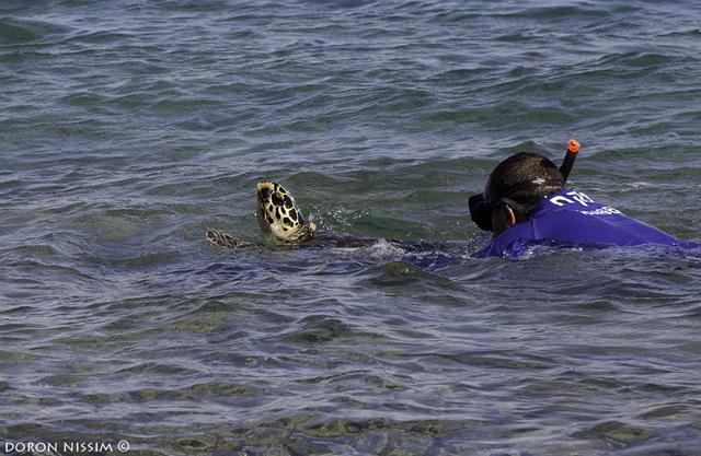 מלווה על ידי פקח שמורת האלמוגים, חן טופיקיאן (צילום: דורון ניסים, רשות הטבע והגנים) ()