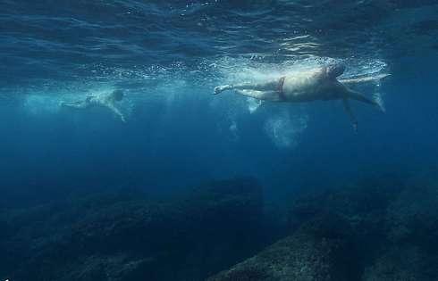 * תצלומים: תומר אבני, צלם תת-מימי (תומר אבני, צלם תת-מימי) (תומר אבני, צלם תת-מימי)