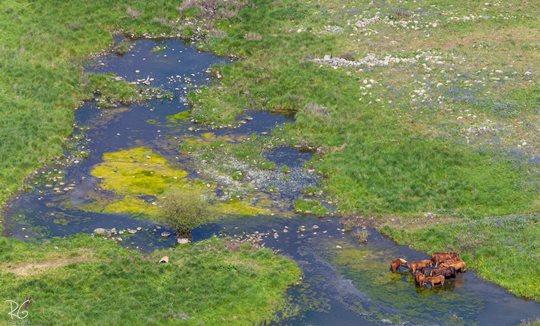 סוסים בדרום רמת הגולן (צילום: רון גפני, SkyPics)