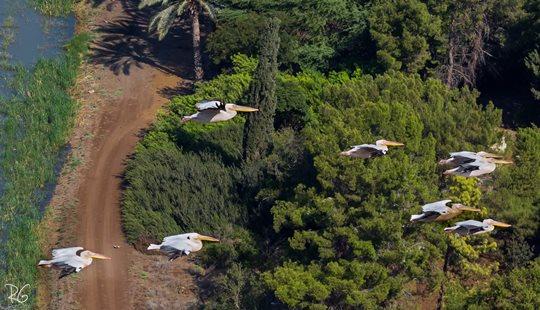 שקנאים בעמק בית שאן (צילום: רון גפני, SkyPics)
