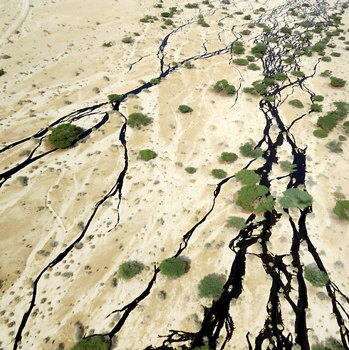 Oil spill in Evrona Nature Reserve. (Photo: Roi Talbi) (Photo: Roi Telby)
