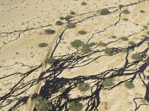 נזק כבד גם לשנים הבאות (צילום: המשרד להגנת הסביבה) (צילום: המשרד להגנת הסביבה)