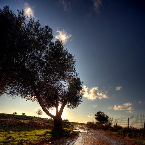 שקט בין נופים מדהימים. מצפה הילה (צילום: אור הילטש)