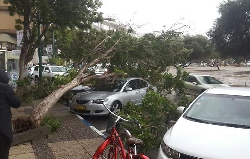 Tree collapses in Tel Aviv's Kikar HaMedina (Photo: Liron Chipser)