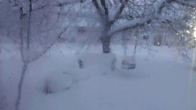 השלג שכיסה את אלוני הבשן ברמת הגולן (צילום: דוברות המועצה האזורית רמת הגולן) (צילום: דוברות המועצה האזורית רמת הגולן)