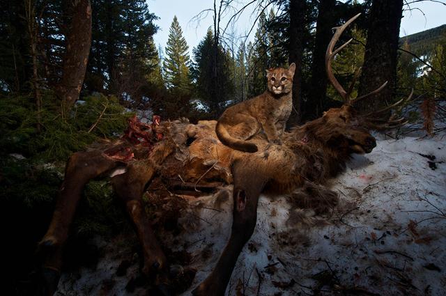 (צילום: steve winter, Nationa Geographic) ()