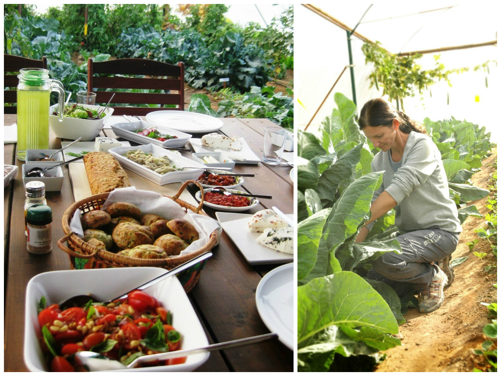 """ארוחה אורגנית באמצע הגינה. גן ירק (צילום: יח""""צ)"""