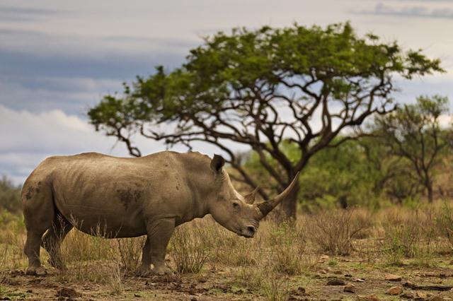 צילום: © Brent Stirton / Getty Images / WWF-UK ()
