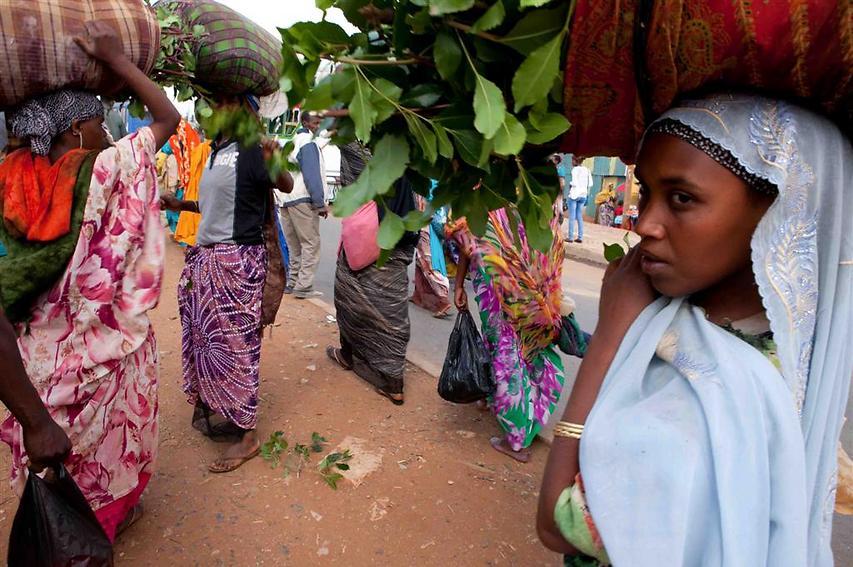 רוכלות הגת משוטטות ברחובותיה של הרר. הרוב המוחלט של הגידול החקלאי העיקרי במחוז הררי הוא הגת, שהינו היצוא השני בגודלו באתיופיה אחרי הקפה (צילום: עמיחי ינקוביץ')
