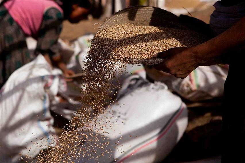 אישה  מסננת דוחן (סוג של דגן), המשמש בעיקר לבישול ביתי של בירה  (צילום: עמיחי ינקוביץ')