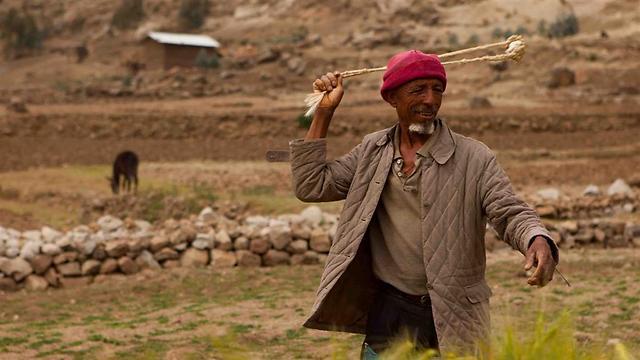 חקלאי מבריח ציפורים בעזרת רוגטקה באחד הכפרים מחוץ ללליבלה, עיר המהווה מרכז דתי ותיירותי בצפון אתיופיה. האזור משמש גם כמרכז לצפרים  (צילום: עמיחי ינקוביץ') (צילום: עמיחי ינקוביץ')