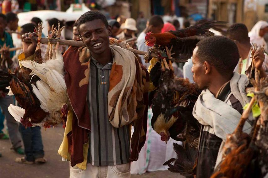 ביום השוק שמתרחש מדי שבת, כפריי האזור מוכרים, בין היתר, גם תרנגולים  (צילום: עמיחי ינקוביץ')