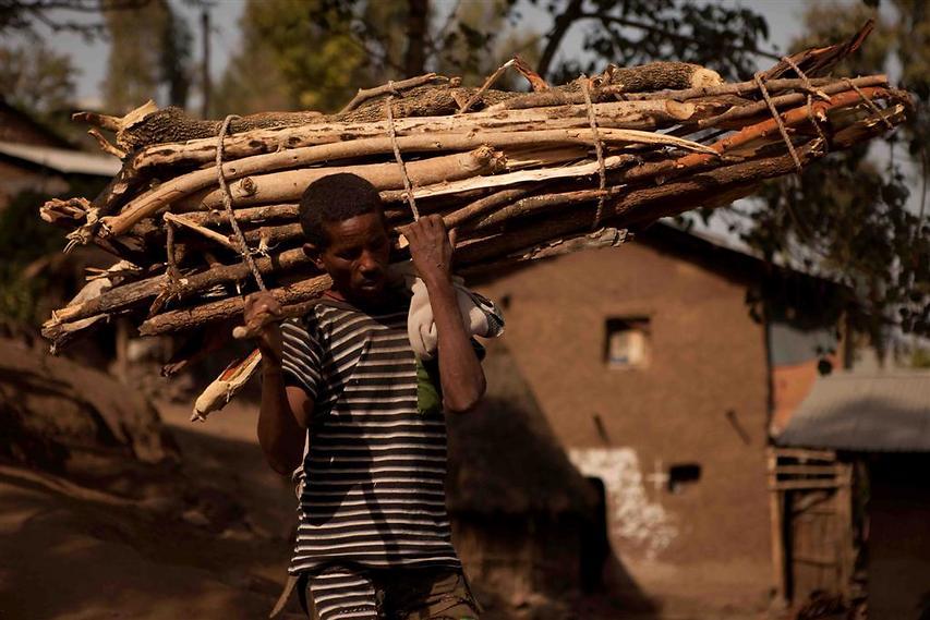 גבר סוחב עצים לבישול ארוחת הצהריים בביתו. מרבית הבישול הביתי באתיופיה מבוצע על מדורות  (צילום: עמיחי ינקוביץ')