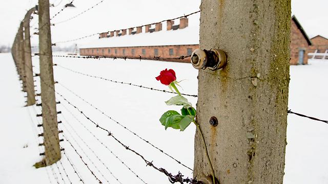 זוכרים. 70 שנה לשחרור אושוויץ (צילום: MCT) (צילום: MCT)