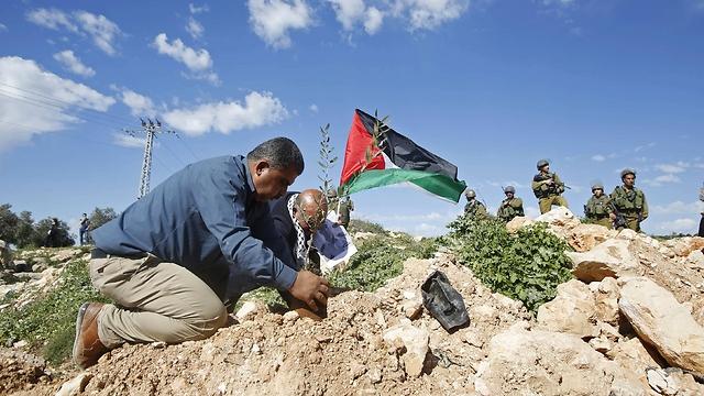 Palestinian plants olive tree during protest aganst Israeli settlements near Bethlehem. (Photo: Reuters)