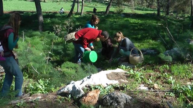 מלקטים פטריות יער בהר הגלבוע (צילום: אסף קמר) (צילום: אסף קמר)