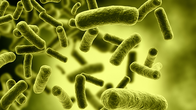MRSA. לרוב החיידקים אינם מזיקים, אלא אם כן חודרים לגוף דרך חתך (צילום: shutterstock) (צילום: shutterstock)