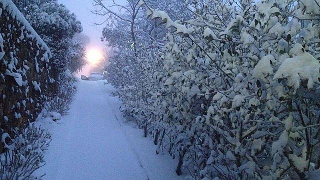 A frozen beauty in Manara (Photo: Upper Galilee Regional Council)