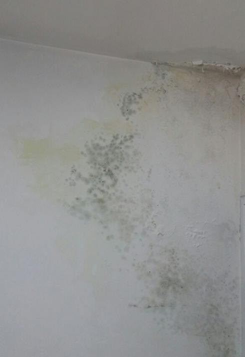 העובש בדירה של ד' מבאר שבע ()